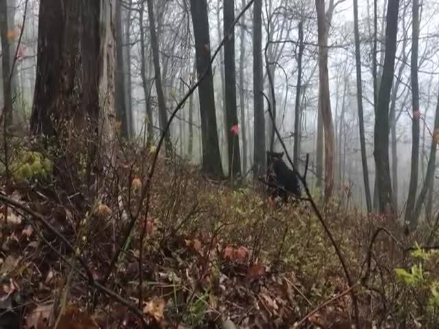 Медведь увидел жертву