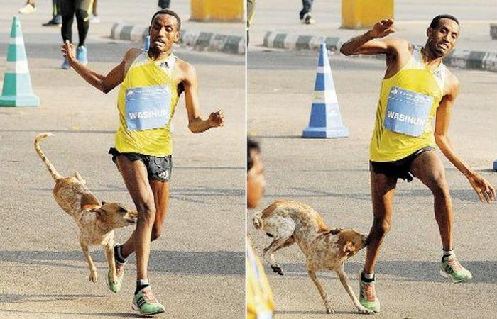 Неудачливый эфиопский бегун проиграл марафон и был атакован собакой (2 фото)