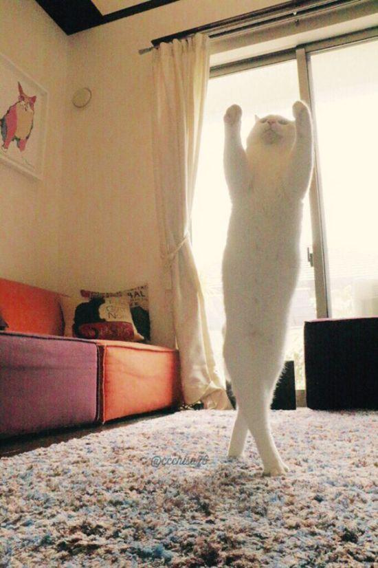 Кошачий балет (8 фото)