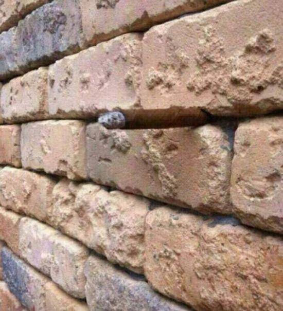 Оптическая иллюзия с кирпичной стеной, которая введет вас в замешательство (5 фото)