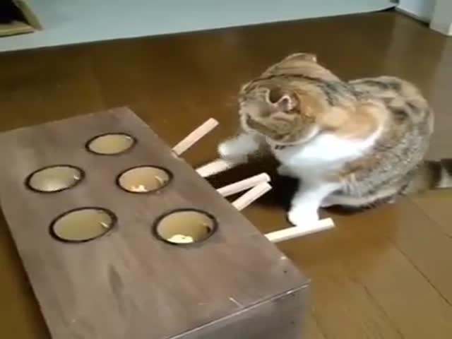 Кот играет сам с собой в игру «Ударь крота»