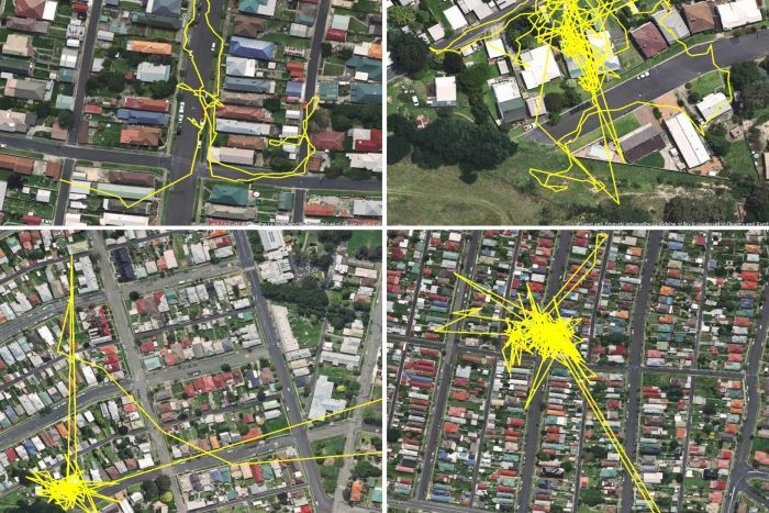 GPS-передатчик показал передвижения кошки в течение одного дня (3 фото)