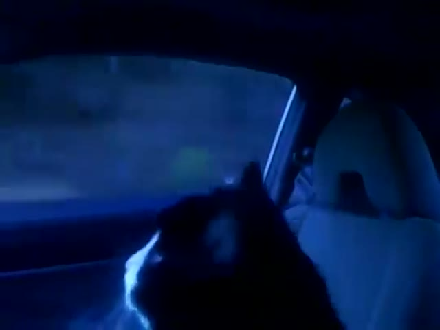 Забавная реакция кота, который первый раз едет в машине