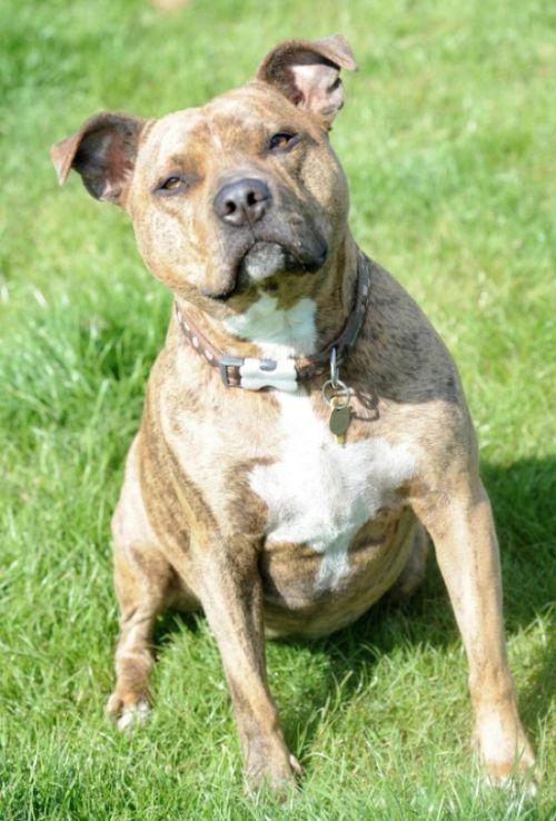 Фрейя - самая одинокая собака Великобритании (4 фото)