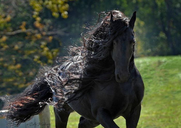 Фредерик - самый красивый в мире конь (5 фото)