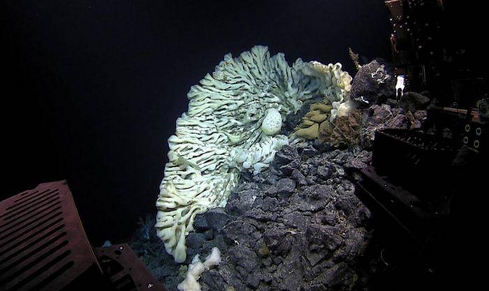 В подводной пещере нашли живую «царь-губку» размером с автомобиль (3 фото + видео)