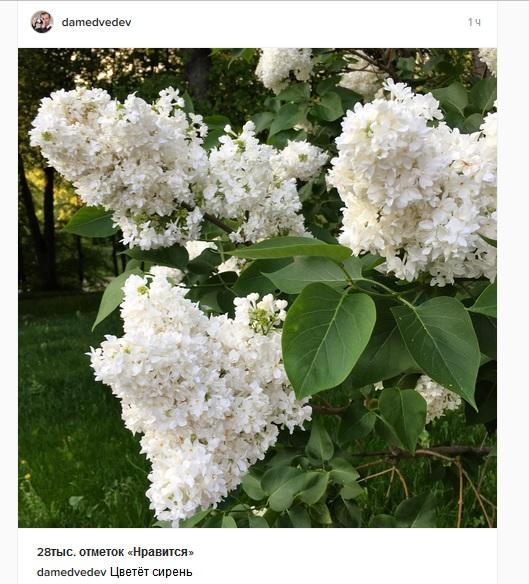 Пользователи сети прокомментировали фото Дмитрия Медведева (4 скриншота)