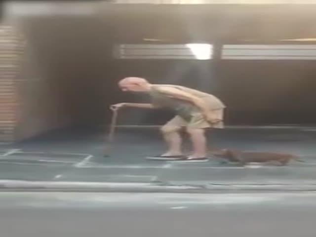 Терпеливый пес ждет хозяина