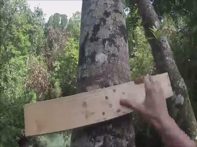 Прыжок в воду с очень высокого дерева