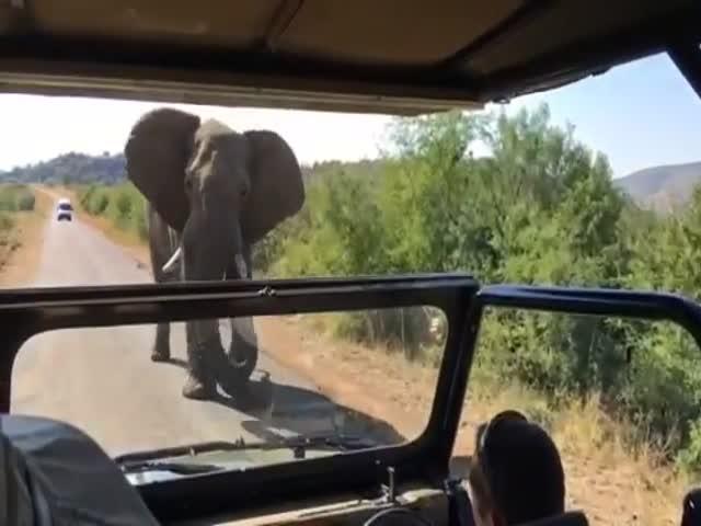 Арнольд Шварценеггер едва не стал жертвой слона