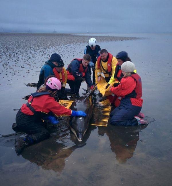 Ошибка навигатора спасла жизнь дельфину (5 фото)
