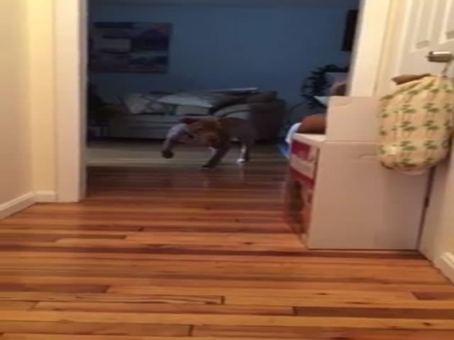 Питбуль боится разбудить спящего кота