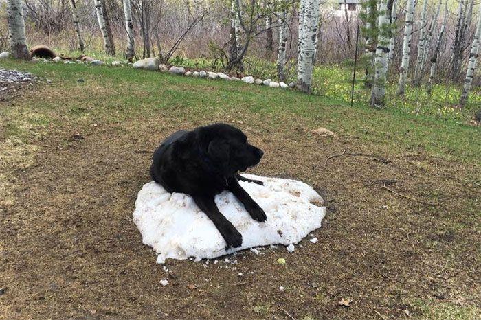 Собака, которая очень любит снег (8 фото)