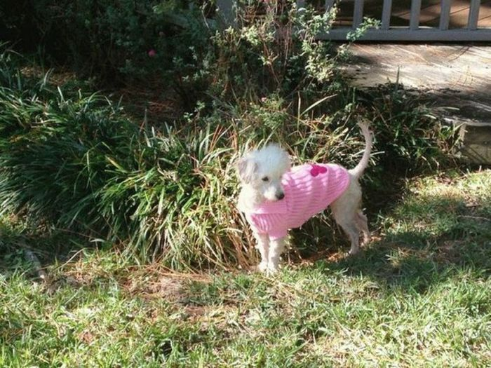 Спасенная собака по кличке Пампкин (8 фото)