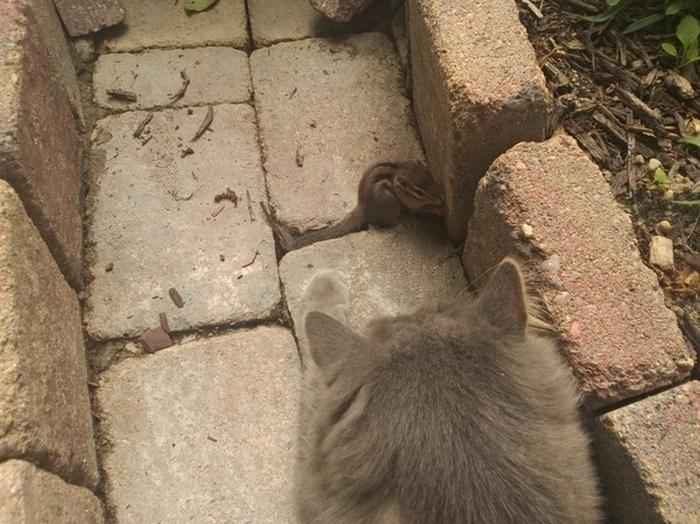 Два друга решили передохнуть (6 фото)