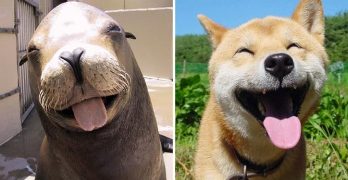 Вот почему морские котики на самом деле «морские собачки» (20 фото)