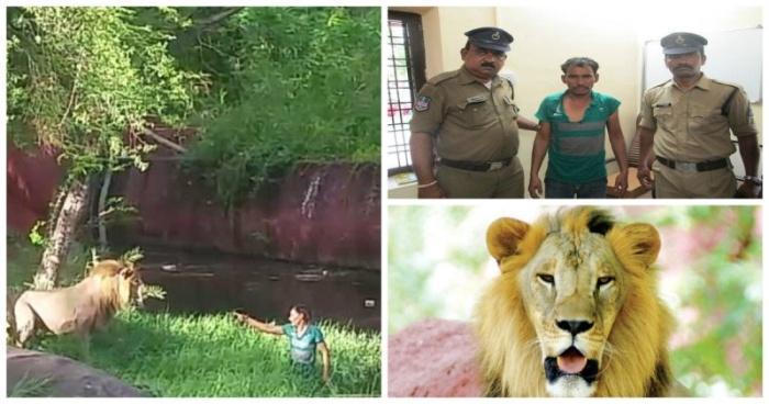 В Индии пьяный мужчина забрался в вольер со львами (фото + видео)