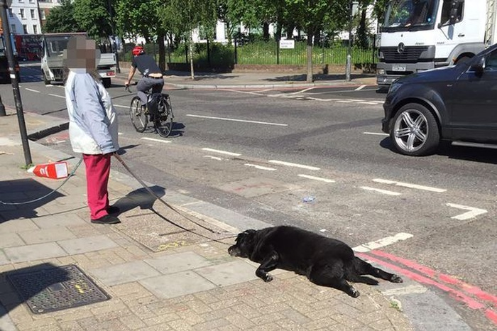В Лондоне женщина тащила за собой мертвую собаку (9 фото)