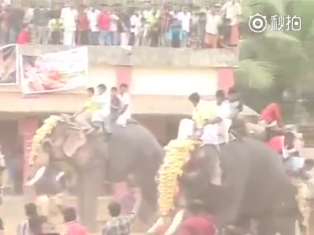 Разъяренный слон испортил праздник