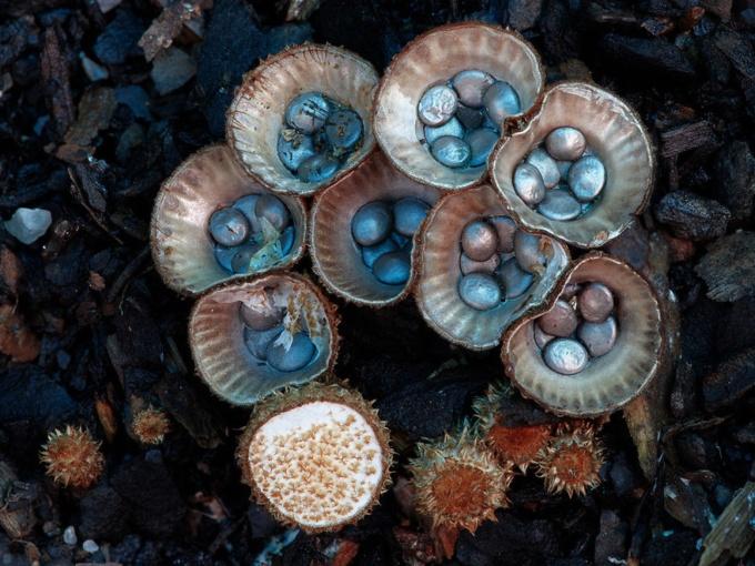 Сказочные фото грибов (31 фото)