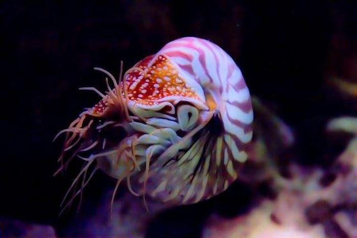 Самые древние существа на планете, сохранившиеся до наших дней (10 фото)