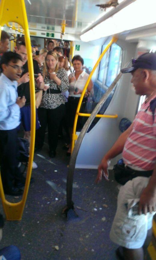 Инцидент в австралийском поезде (3 фото)