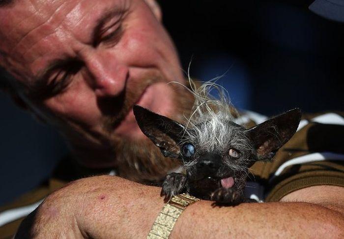 В Калифорнии прошел конкурс на титул самой уродливой собаки в мире (5 фото)