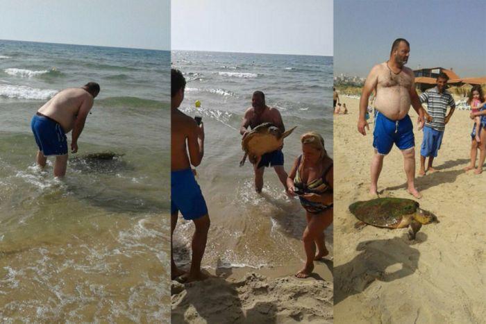 В Ливане отдыхающие до полусмерти замучили черепаху, делая с ней селфи (4 фото)
