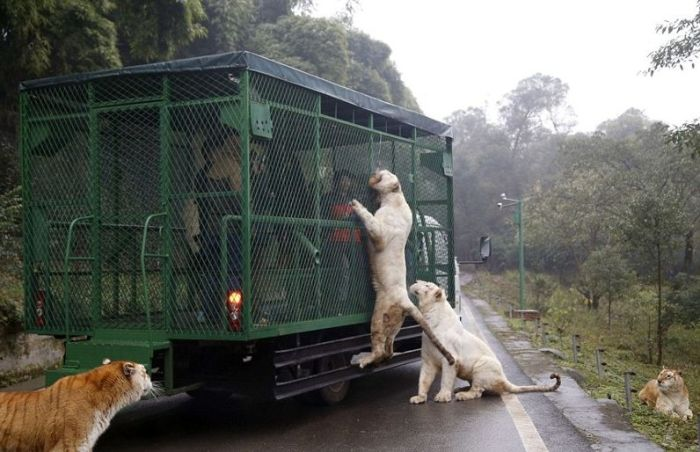 Уникальный китайский зоопарк (10 фото)