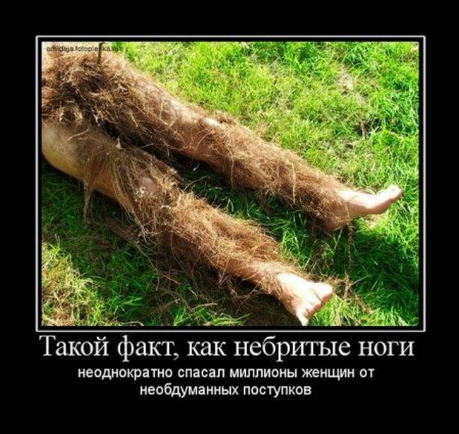 http://trinixy.ru/pics5/20160630/demotivatory_25.jpg