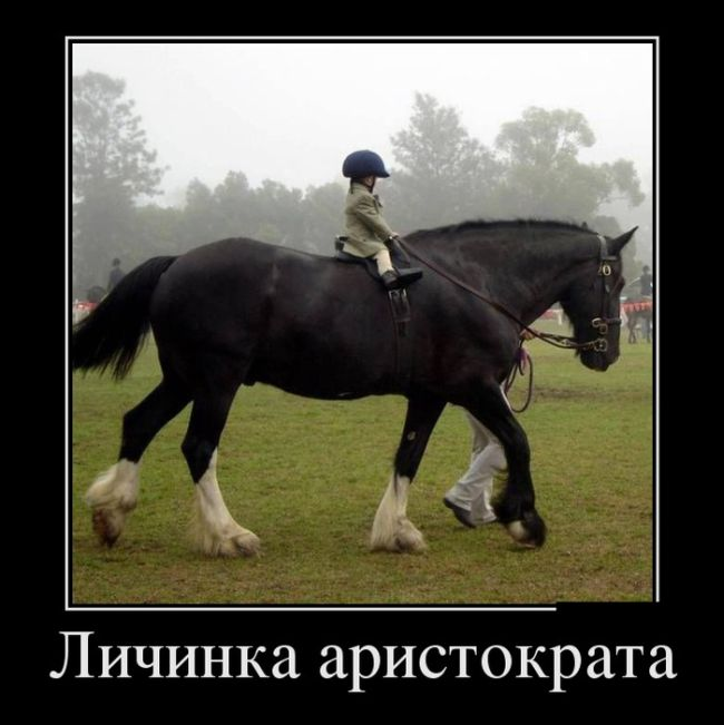 http://trinixy.ru/pics5/20160630/demotivatory_27.jpg