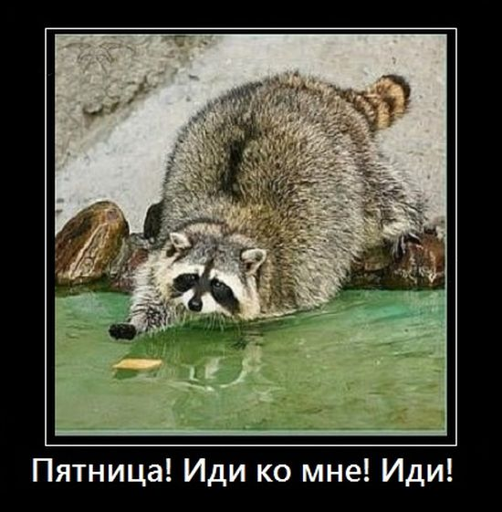 http://trinixy.ru/pics5/20160630/demotivatory_28.jpg
