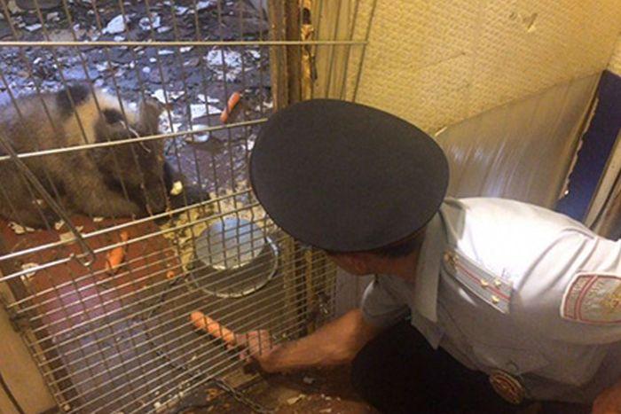 Медвежонка обнаружили в гараже на юге столицы (3 фото)