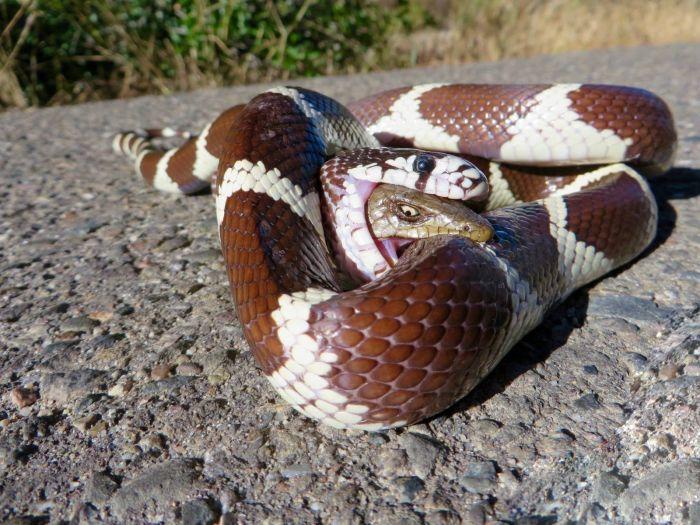 Яркий пример стойкости из животного мира (2 фото)