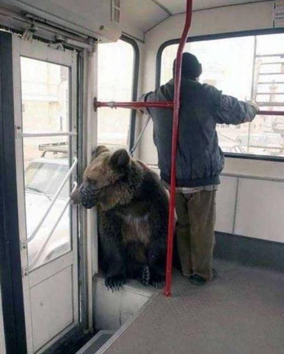 Фото, которые возможно было сделать только в России. Часть 32 (38 фото)