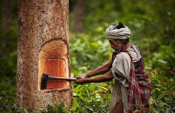 Жизнь охотников-собирателей из племени Рауте (11 фото)