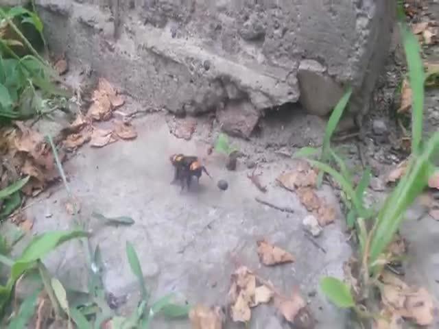 Странное насекомое