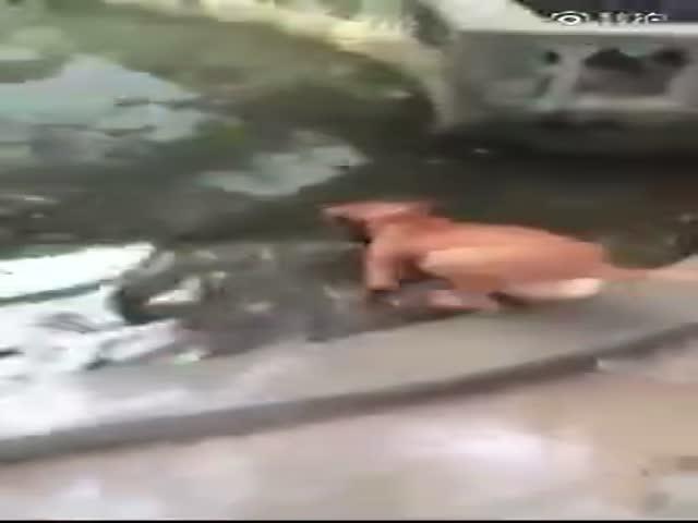 Собака бросилась спасать хозяина