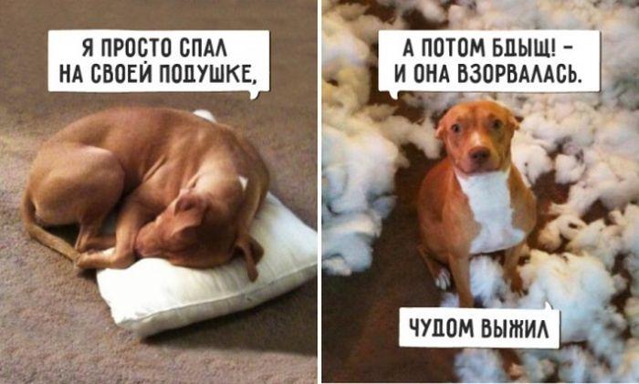 http://trinixy.ru/pics5/20160707/podborka_vecher_01.jpg