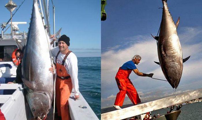 Самая дорогая рыба в мире (10 фото)