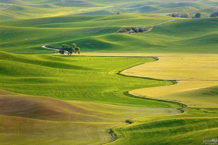 Китайский фотограф Чан Ху случайно переснял известные обои Windows XP (5 фото)