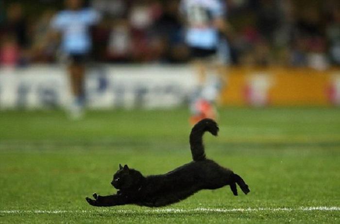 Красивый черный кот выбежал на поле во время матча по регби