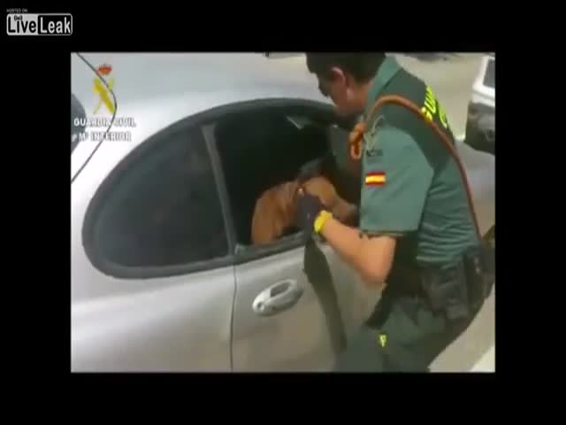 Полицейские спасли собаку из машины