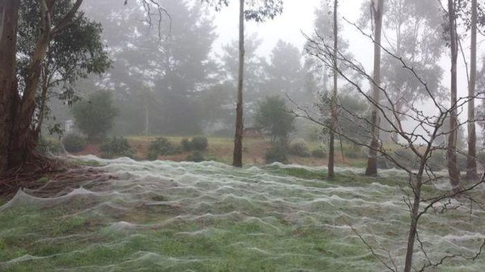 Зимние пейзажи Австралии (7 фото)