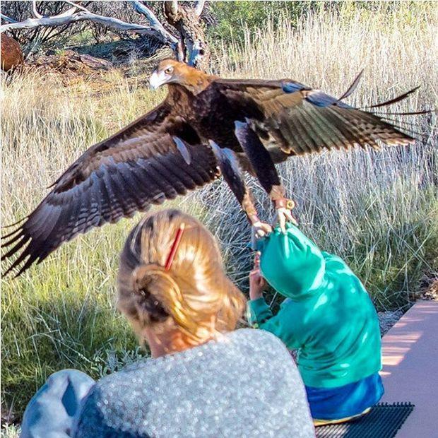 В Австралии орел напал на мальчика (фото)