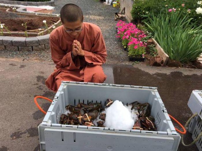 Буддийские монахи выпустили сотни омаров обратно в океан (11 фото)