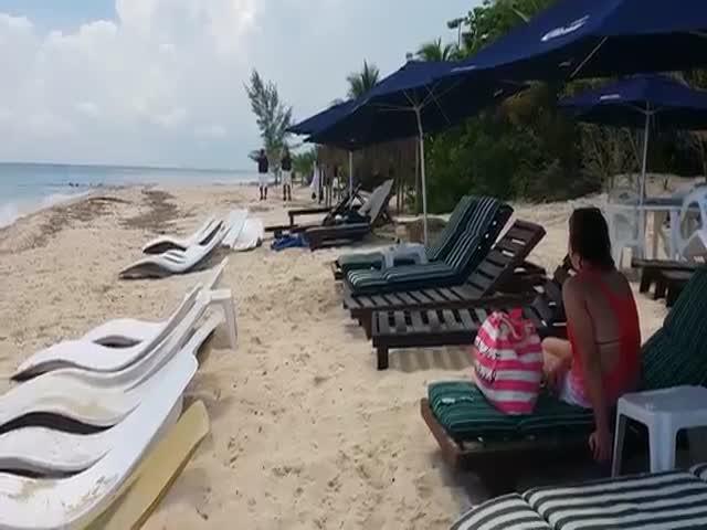 Крокодил вышел на пляж