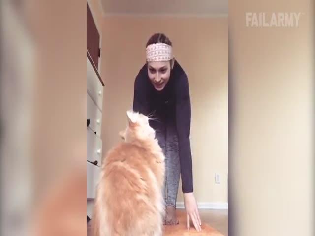 Фейлы с котами