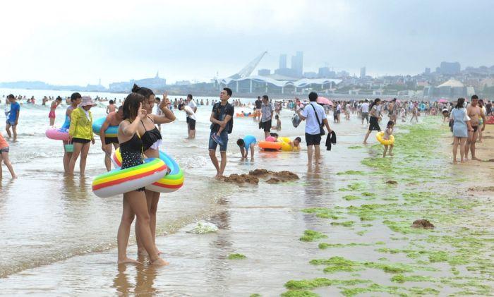 Тонны водорослей на китайском пляже (19 фото)
