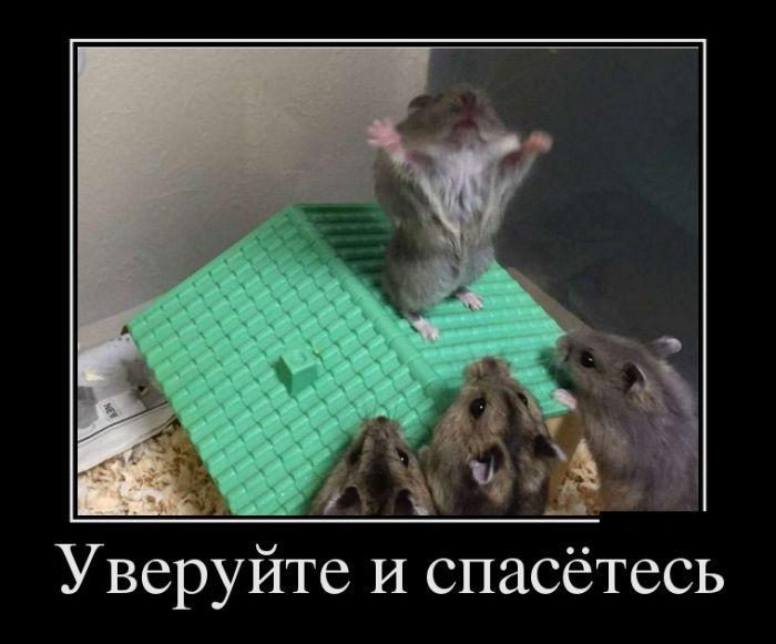 http://trinixy.ru/pics5/20160714/demotivatory_04.jpg
